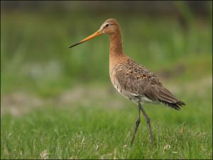 Foto Weidevogelbescherming Reusel-De Mierden